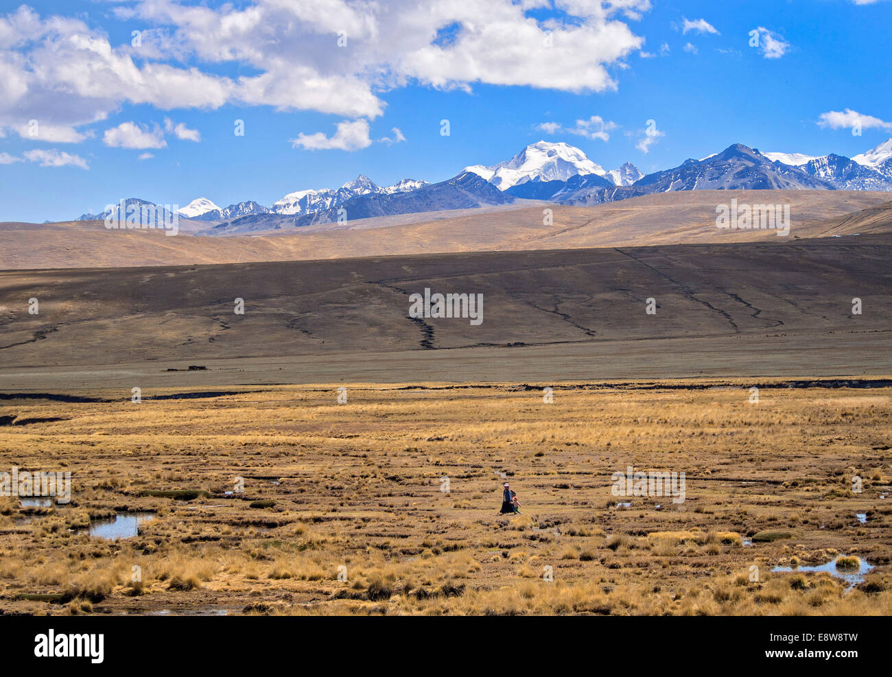 Woman alone walking in the plateau with the Cordillera Real on the back, Bolivian plateau Altiplano, Bolivia - Stock Image