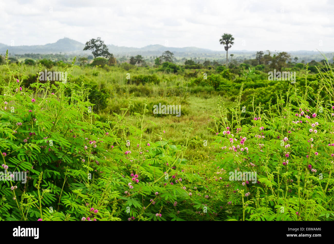 Bush and plants in Nigeria, Edo State - Stock Image