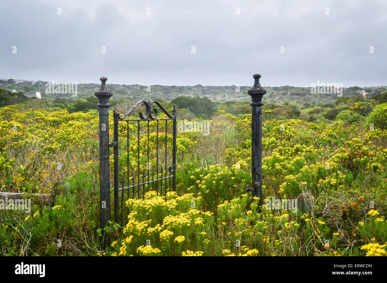 A gate in a field of flowers leading to nowhere - Stock Image