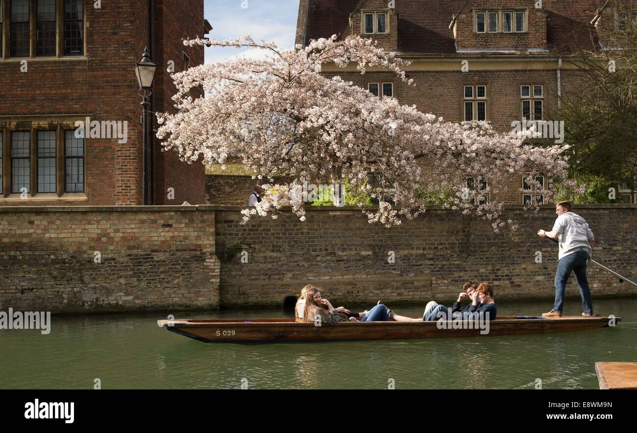 People out punting on the river Cam in Cambridge on a sunny spring day. March 17, 2014. - Stock Image