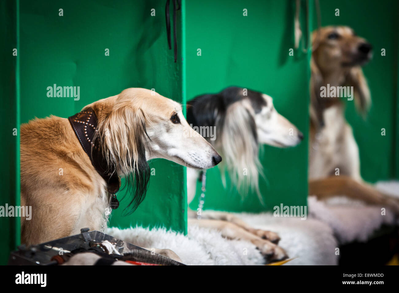 General view of Crufts 2014 at the NEC in Birmingham, UK. 7th March 2014. - Stock Image