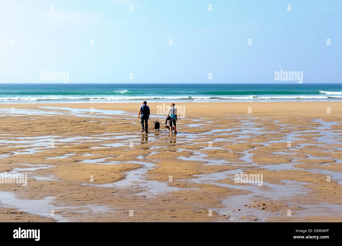 A couple walking a dog on Penhale beach Cornwall England uk - Stock Image