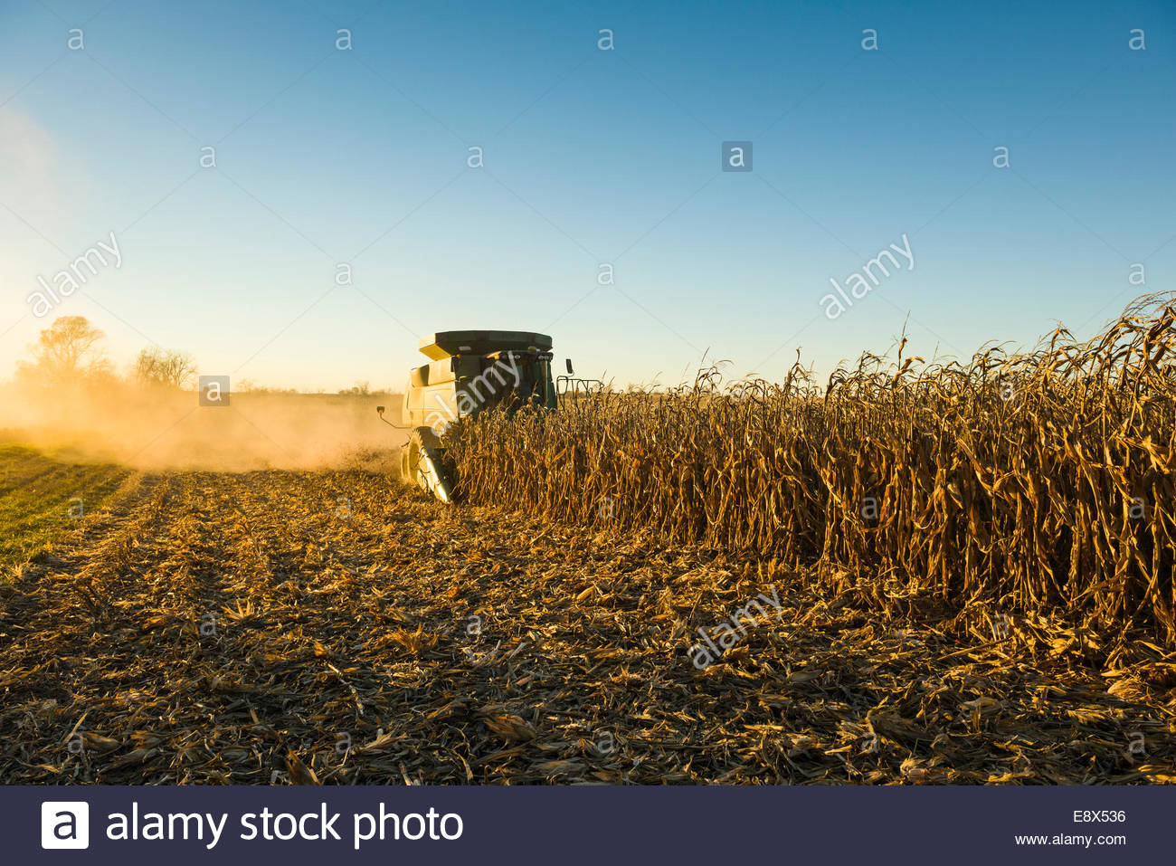 A Farmer Harvests Yellow Grain Corn With His John Deere Combine At Dusk In Southern Iowa