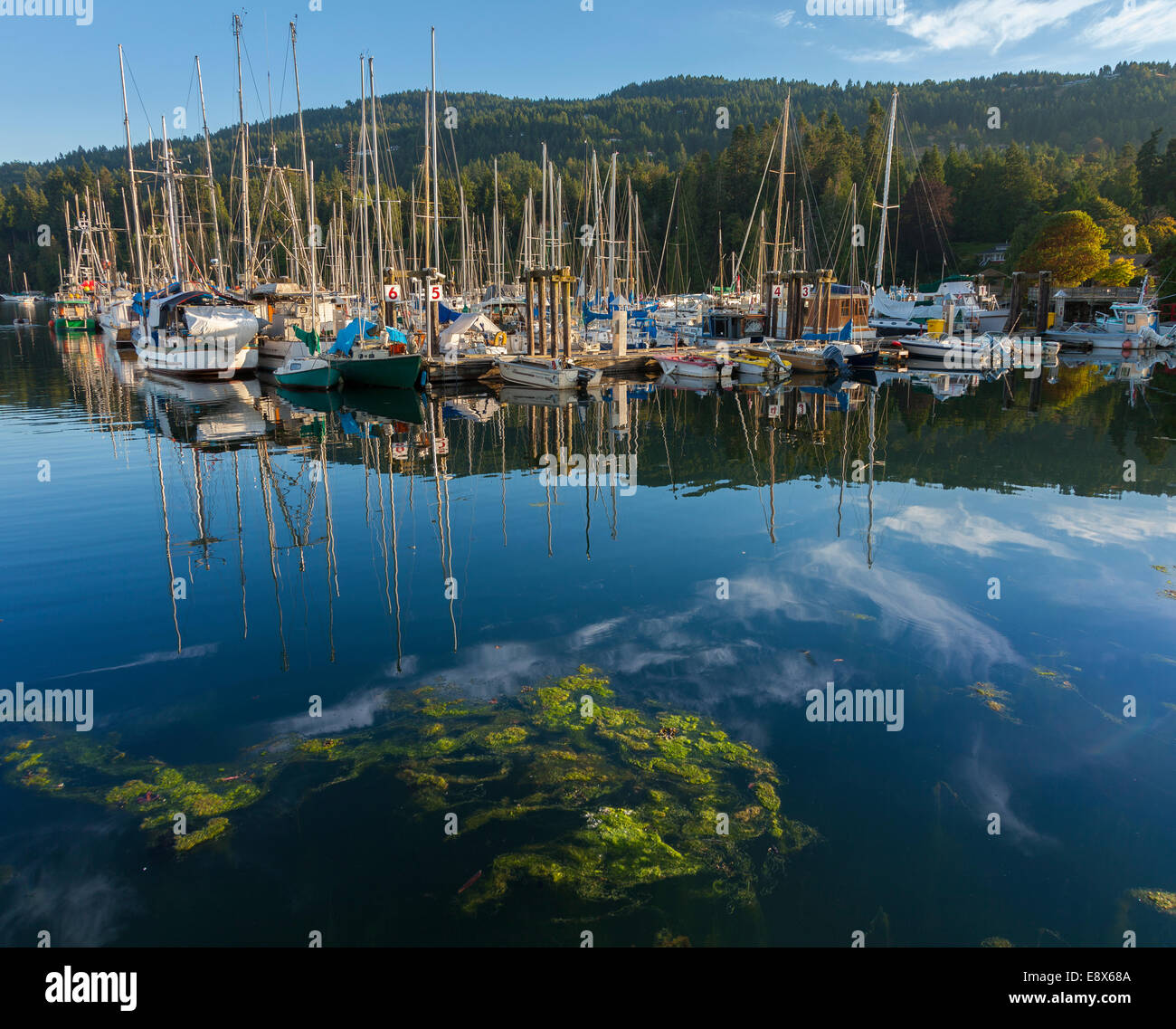 British Columbia Canada View Of Boats In Ganges Harbor