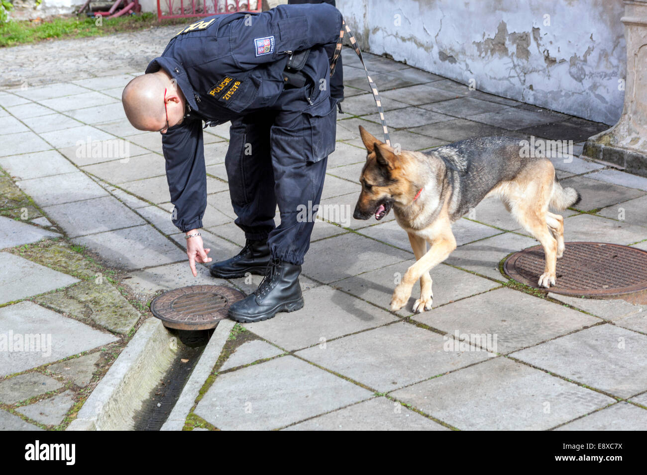 Police with dog, a German shepherd searches for explosives, control objects,  Czech police - Stock Image