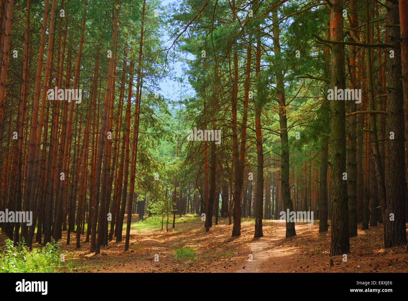 Sun Winding Path Stock Photos & Sun Winding Path Stock Images - Alamy