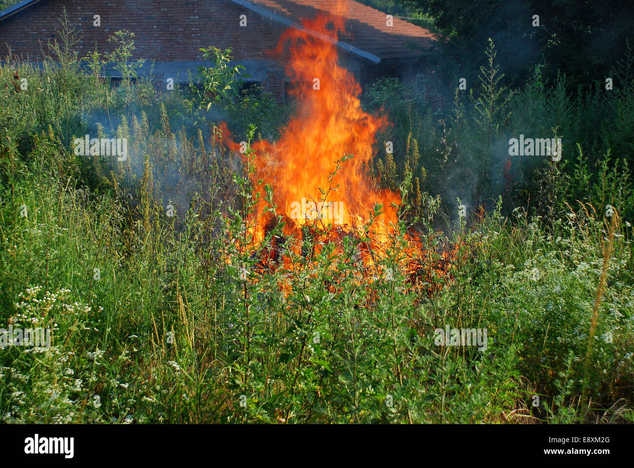 Fire in green grass - Stock Image