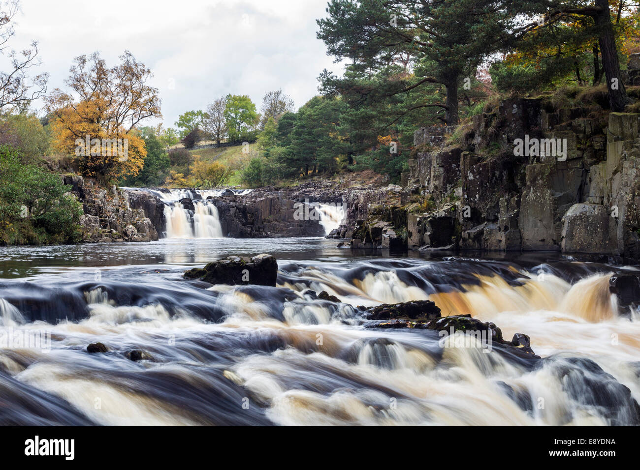Autumn Colours at Low Force on the River Tees in Upper Teesdale, County Durham UK. - Stock Image