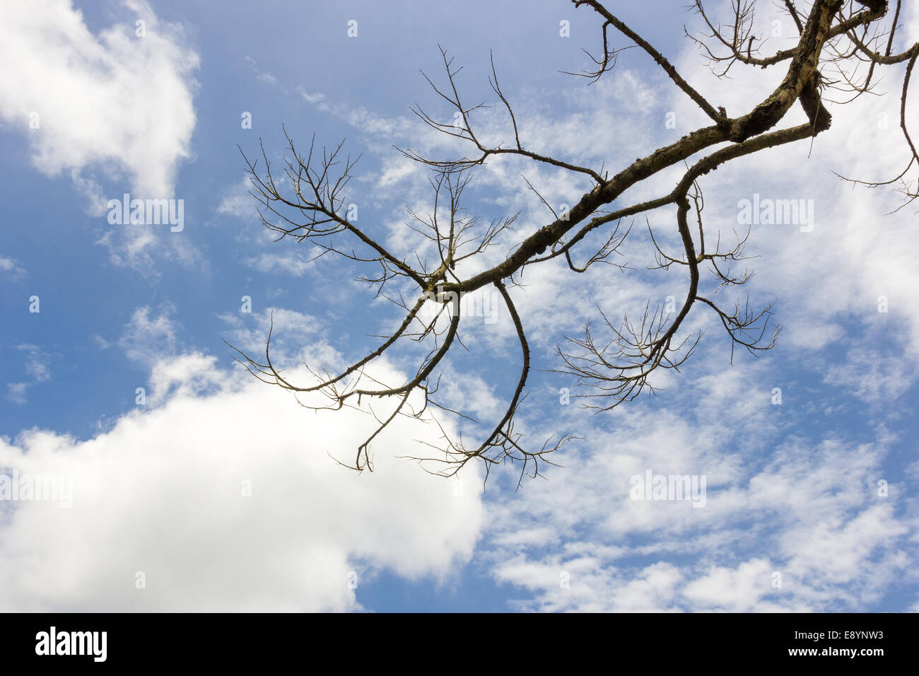 The dead branch - Stock Image