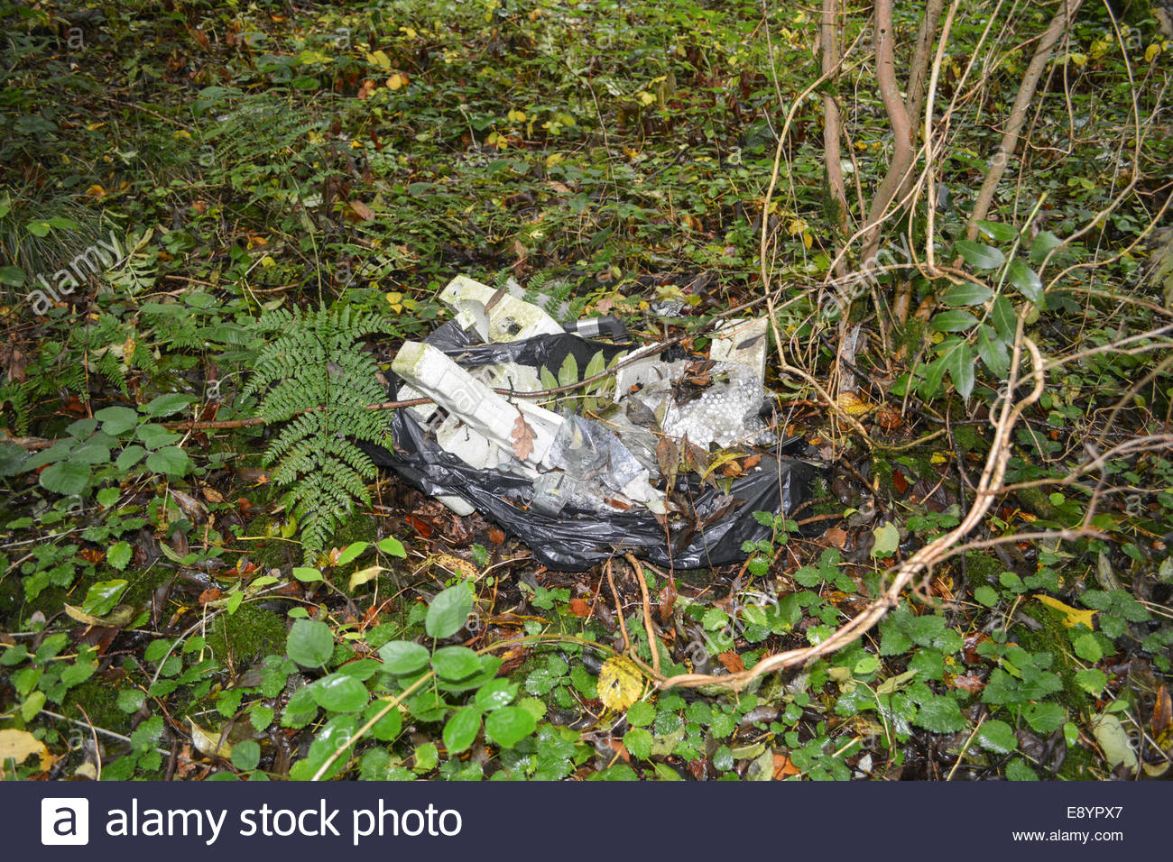 Rubbish dumped in woodland in the Shropshire countryside. - Stock Image