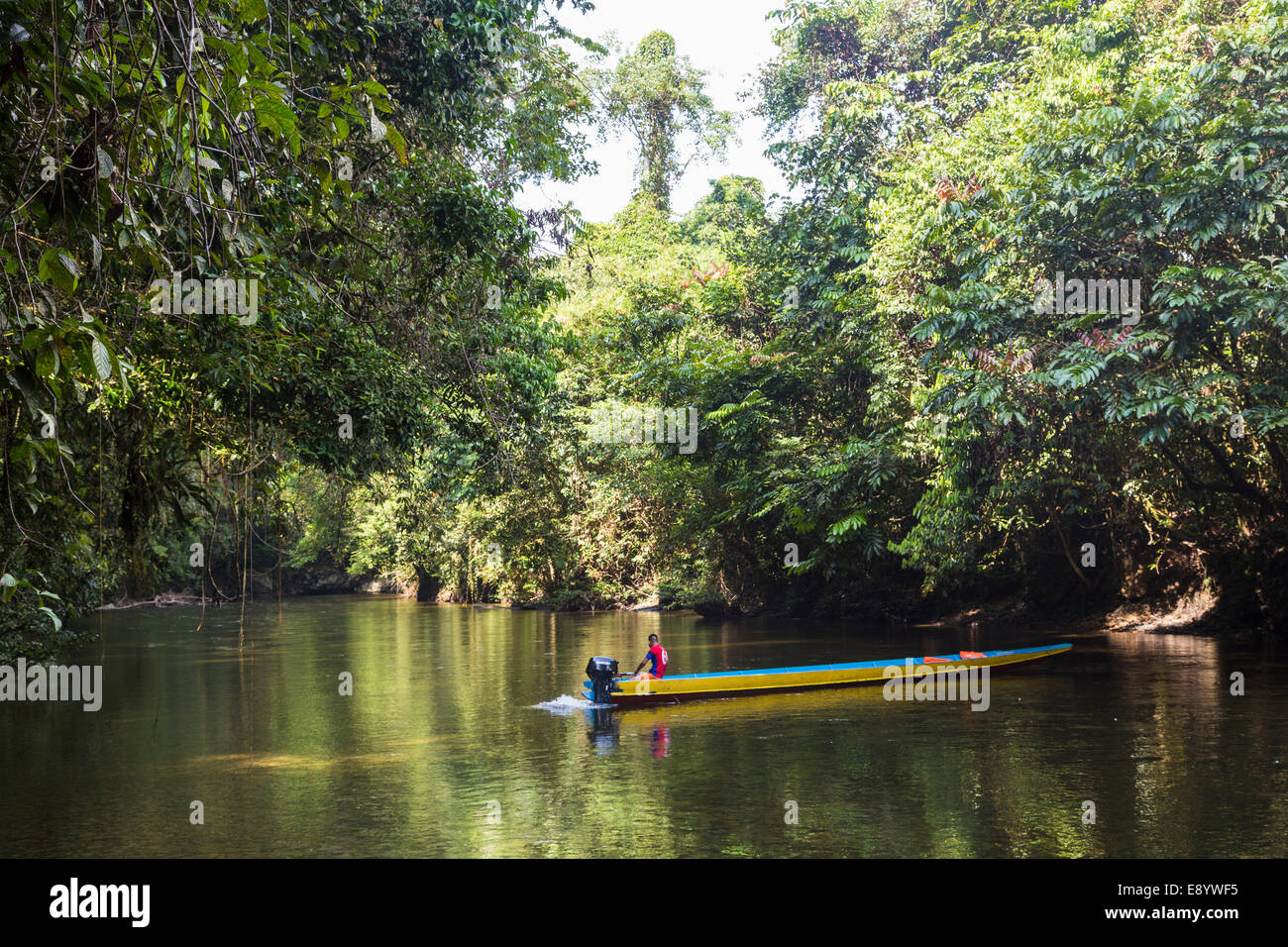 Boatman in longboat on River Melinau at Cave of the Winds, Mulu, Malaysia - Stock Image