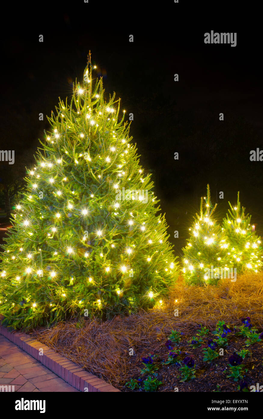 Spruce Trees White Christmas Lights Stock Photos & Spruce Trees ...
