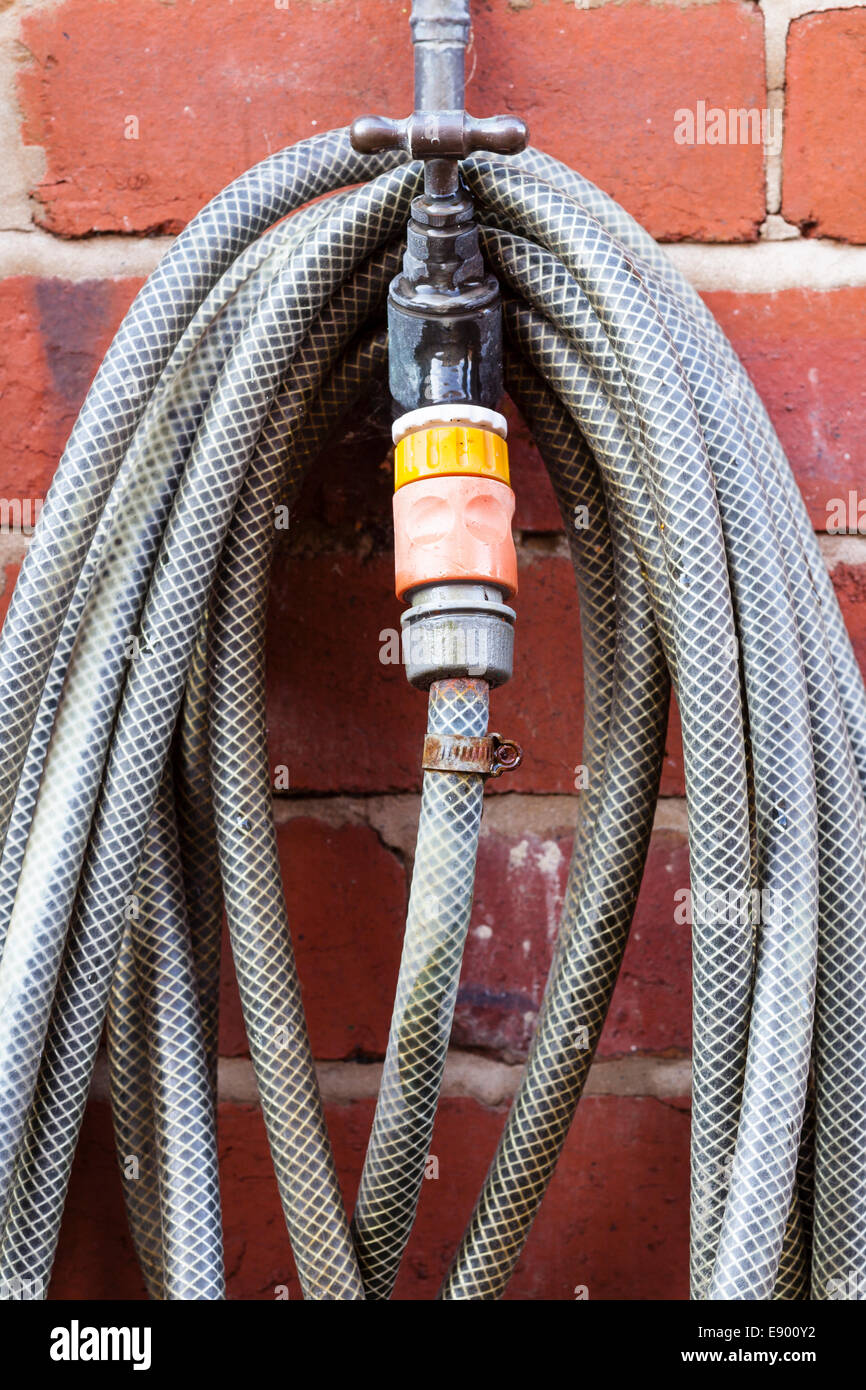 Garden hosepipe coiled over external wall tap - Stock Image
