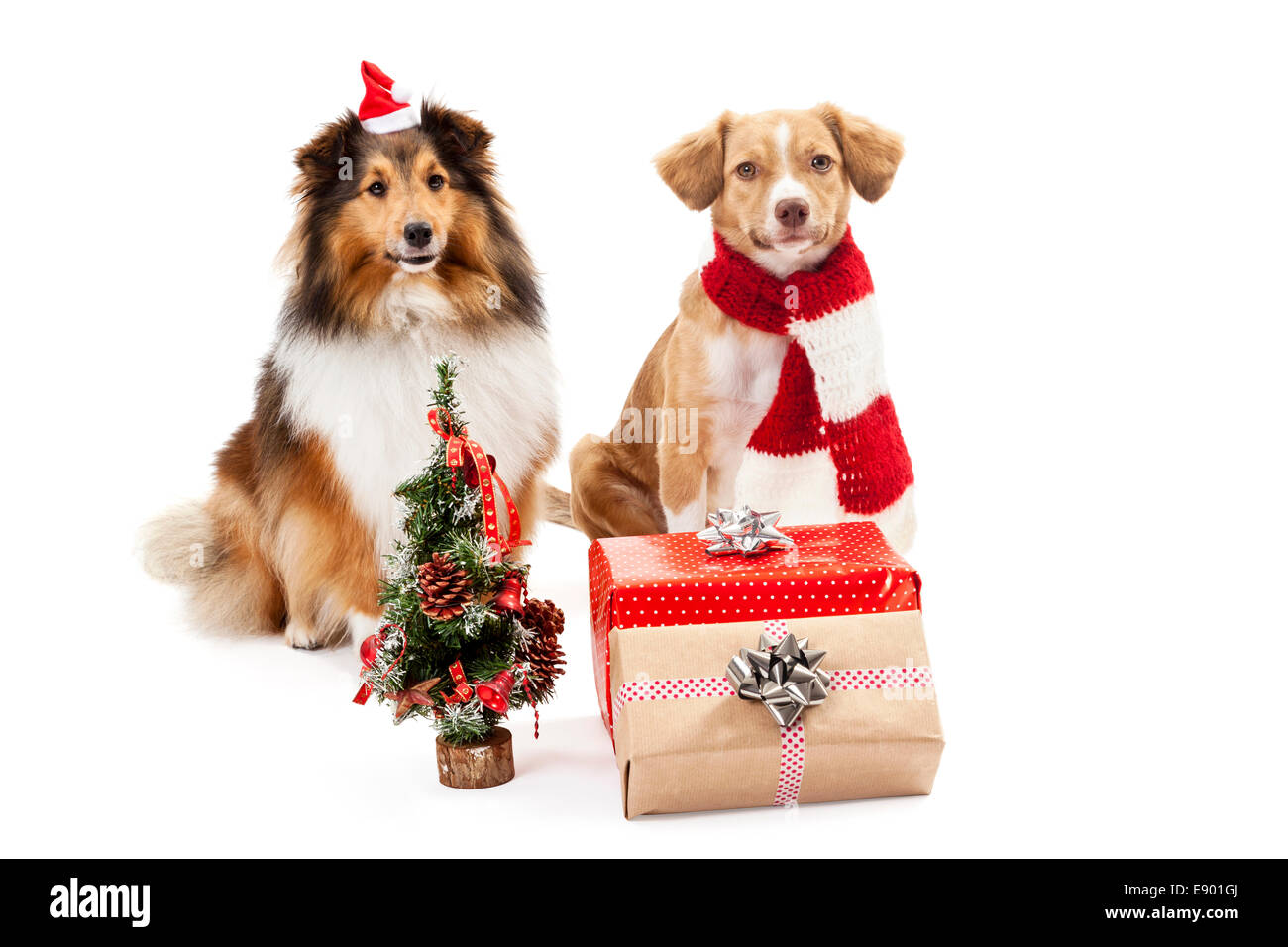 Gifts and christmas tree in front of two dogs over white background - Stock Image