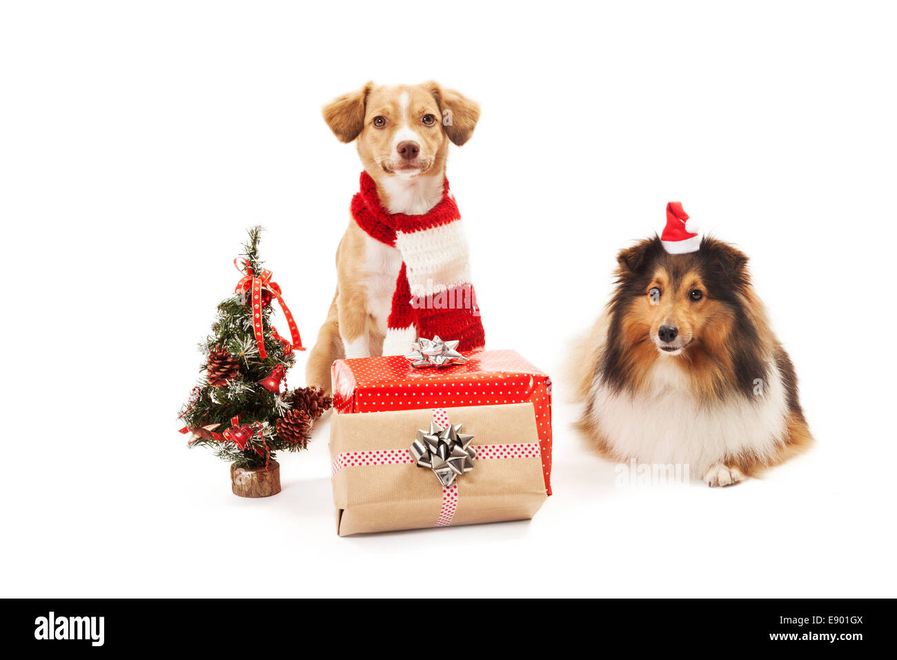Two dogs with christmas presents and a small christmas tree. - Stock Image