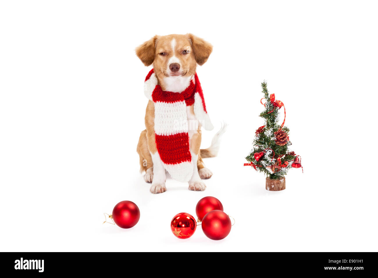 Cute dog with christmas tree and baubles over white background - Stock Image