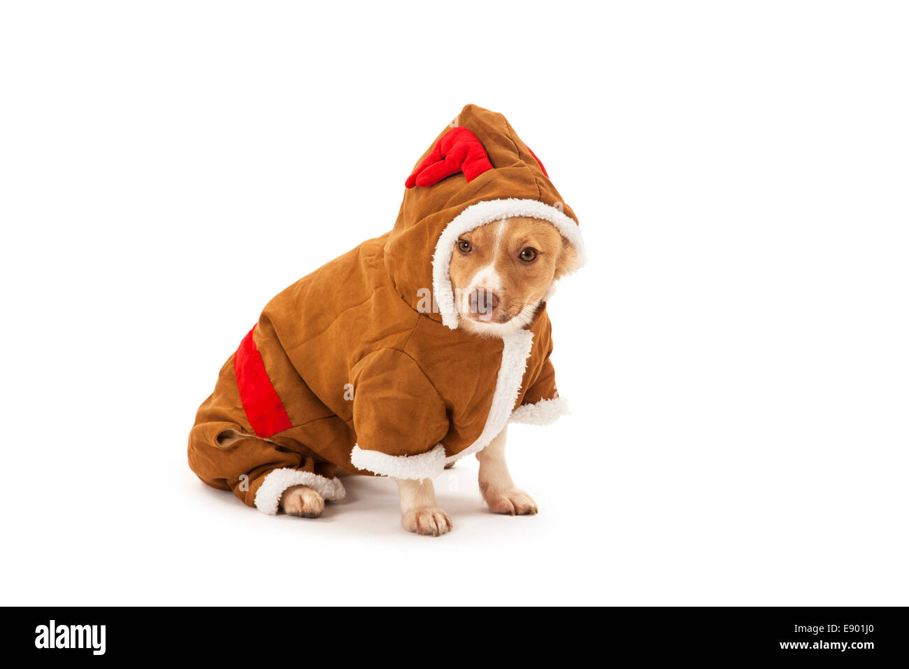 Portrait of dog in reindeer costume over white background - Stock Image
