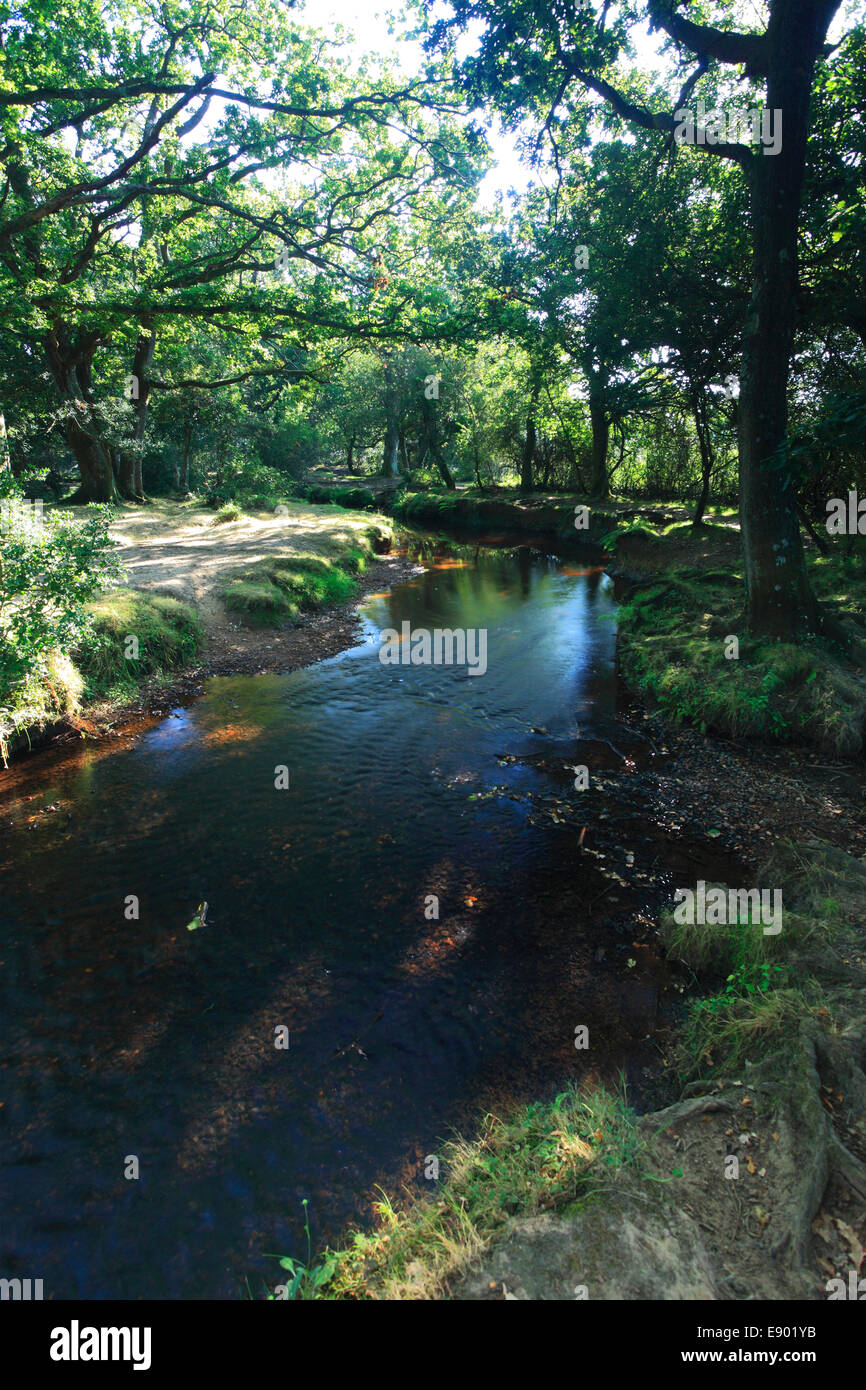 Ober Water, White Moor, New Forest National Park; Hampshire County; England; Britain, UK Stock Photo