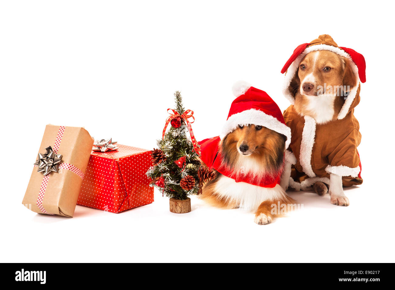 Portrait of two dogs with christmas gift and miniature christmas tree - Stock Image