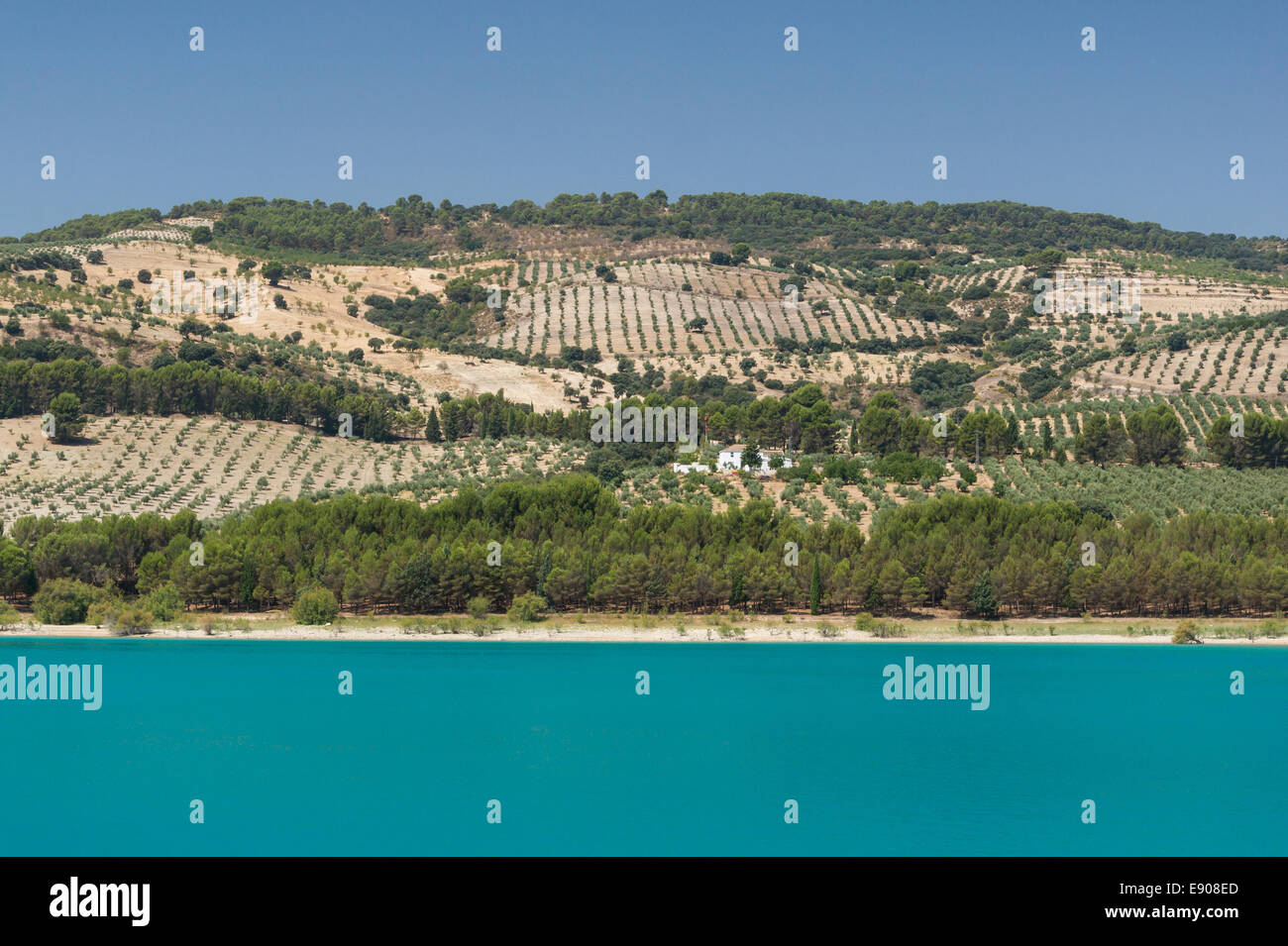 Olive groves and almond groves near Arenas del Rey, behind the lake of los Bermejales, Andalusia, Spain. - Stock Image