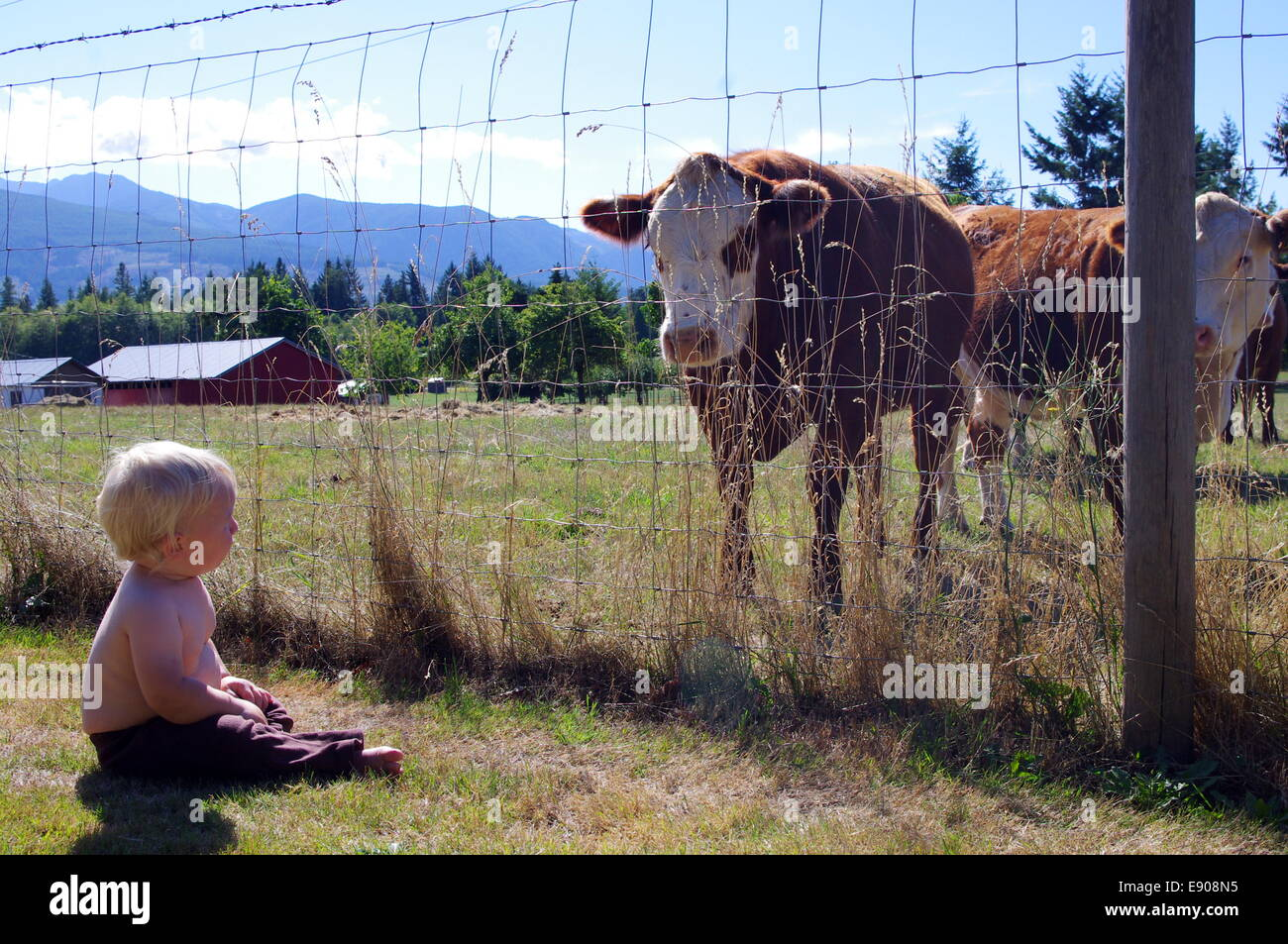 Photograph of a cow and a baby looking at each other. - Stock Image