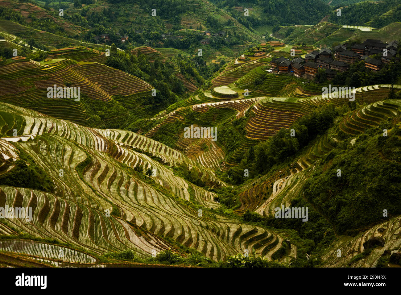Steep Rice Terrace Mountain Longji Overcast - Stock Image