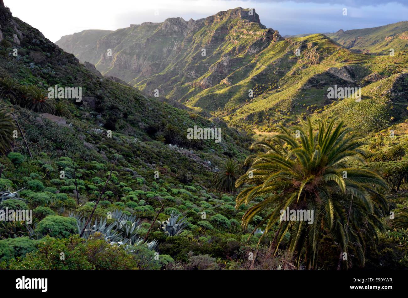 La Gomera Canary Islands - Stock Image