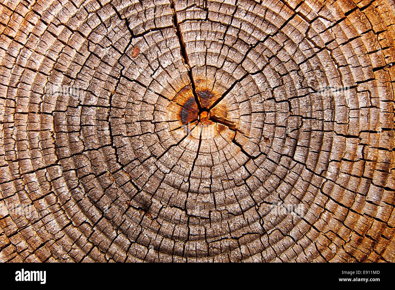 Tree grate - Stock Image