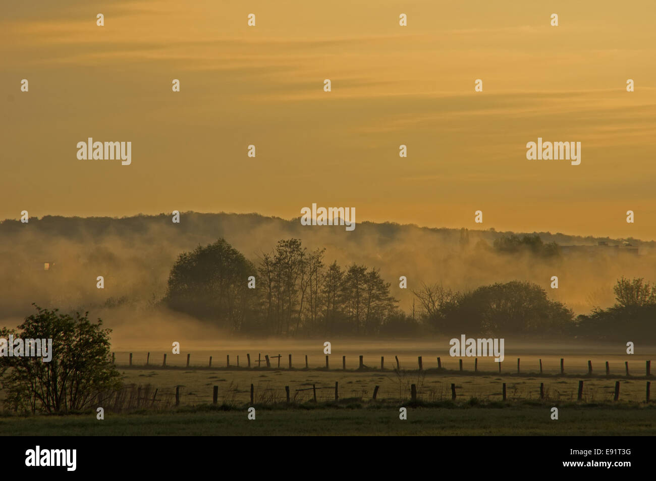 Morning spirit with waft of mist Stock Photo