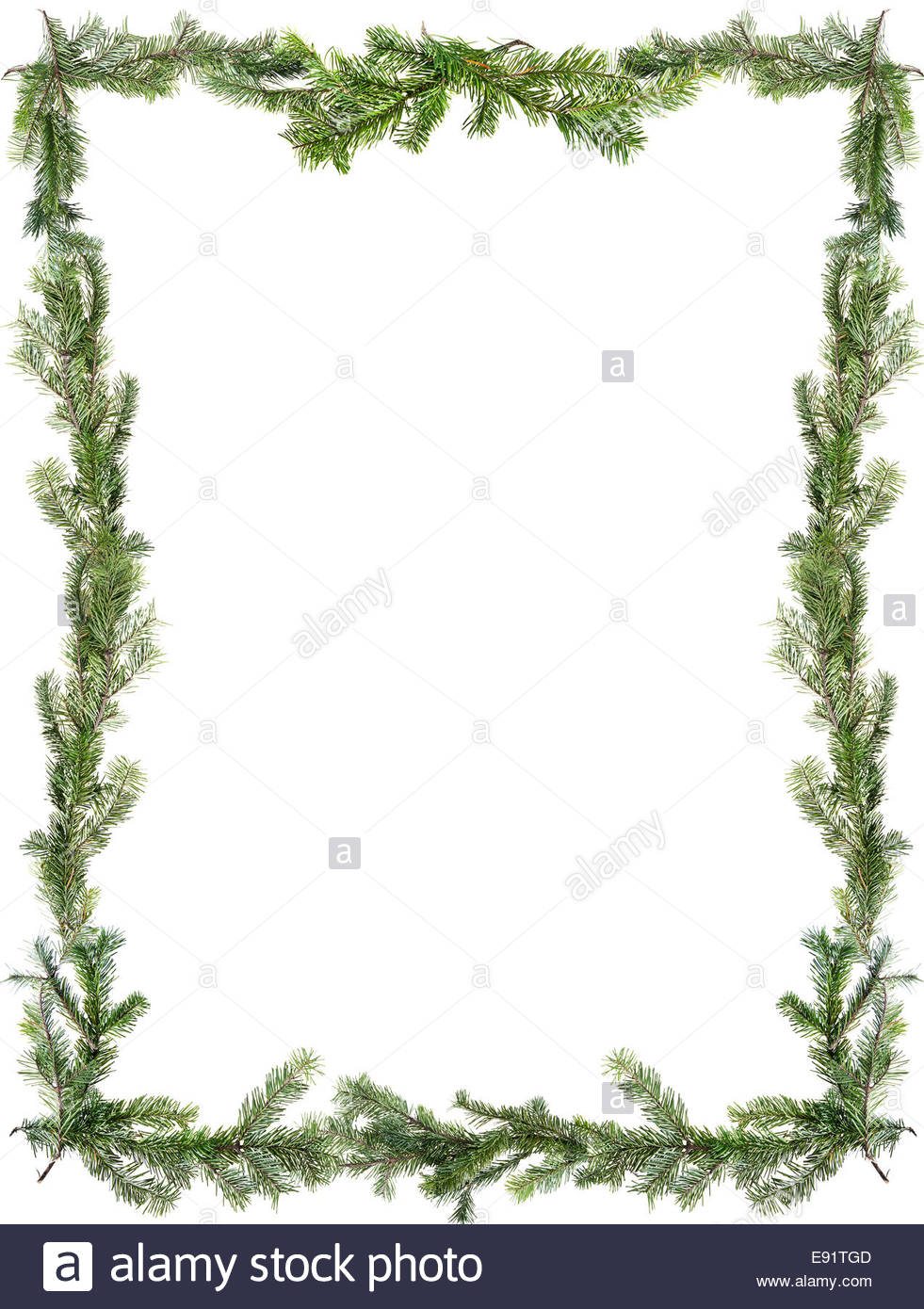 Design element.  Frame of spruce branches - Stock Image