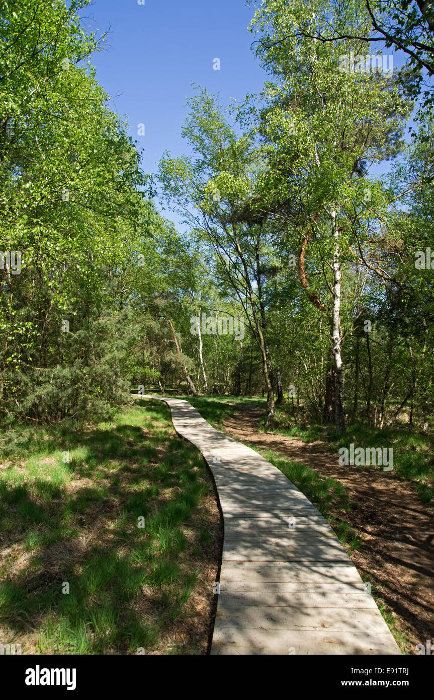 Boardwalk through the Venner Moor, Germany Stock Photo