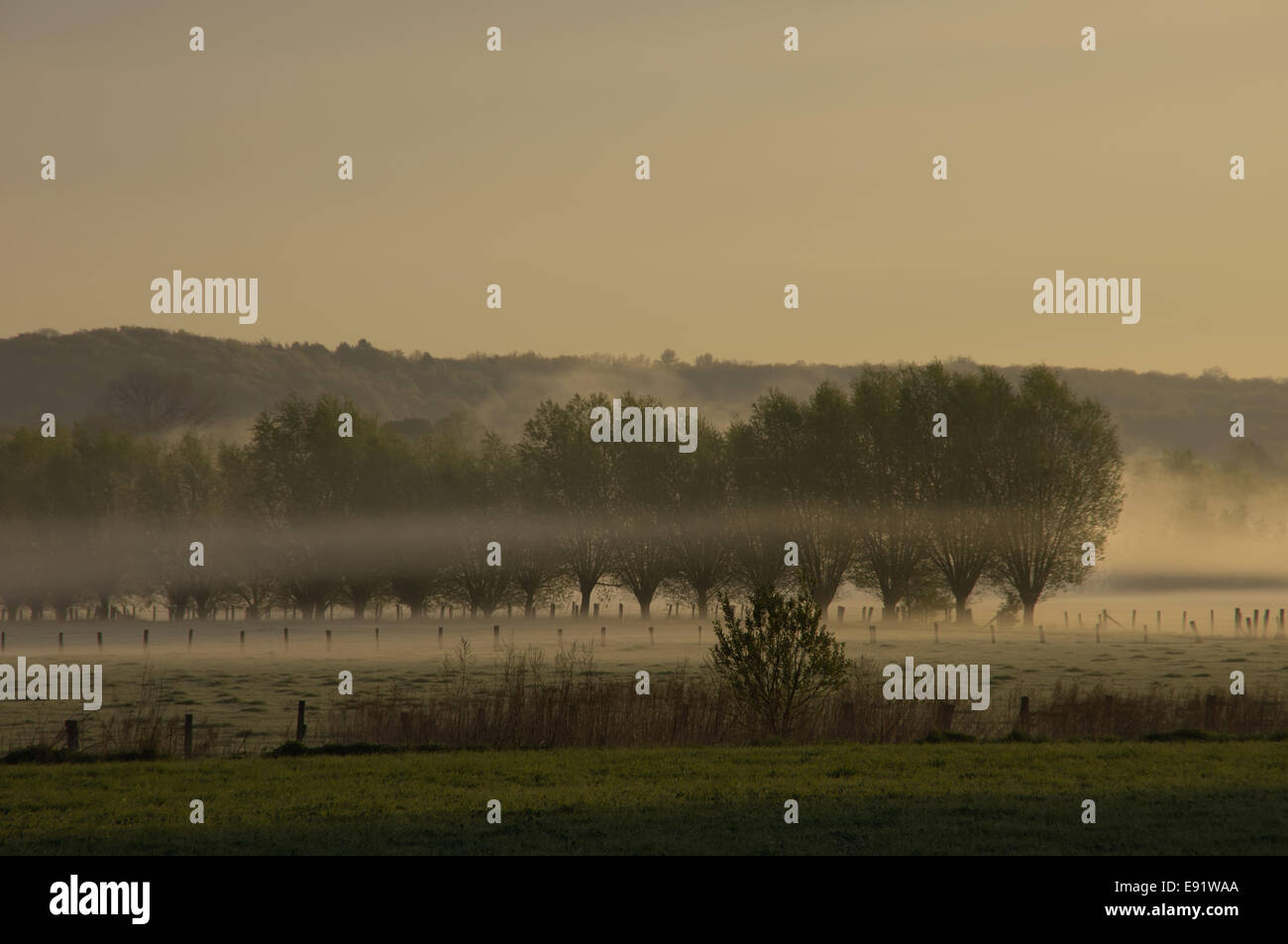 Morning spirit with waft of mist - Stock Image