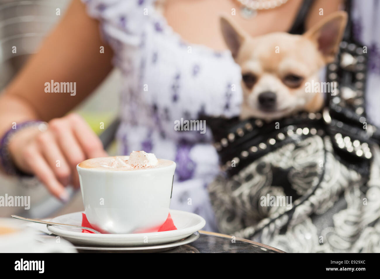 with a lapdog in a street cafe - Stock Image