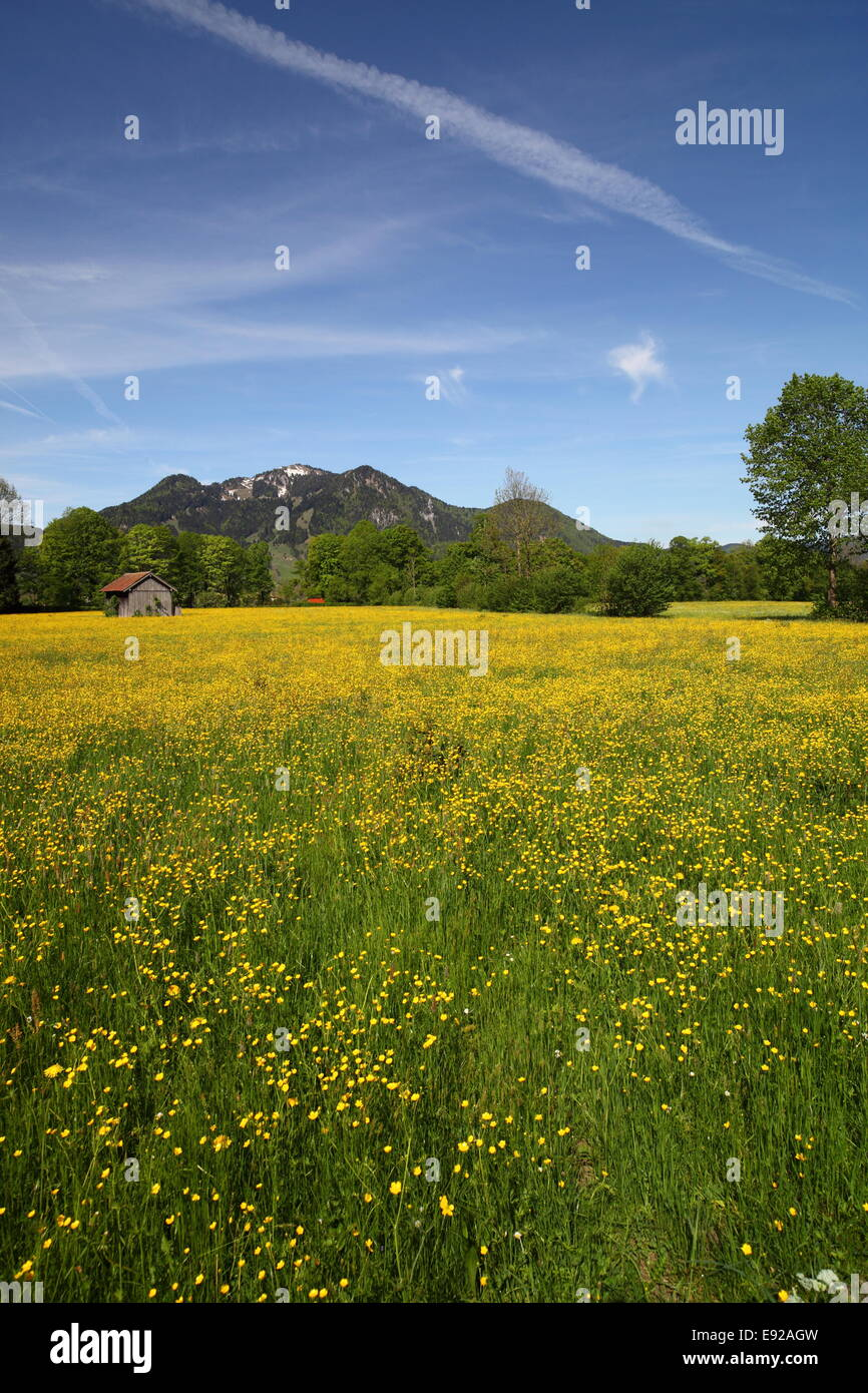 flower field - Stock Image