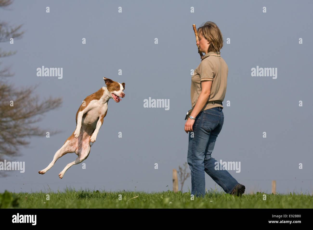 young woman practise tricks with her dog - Stock Image