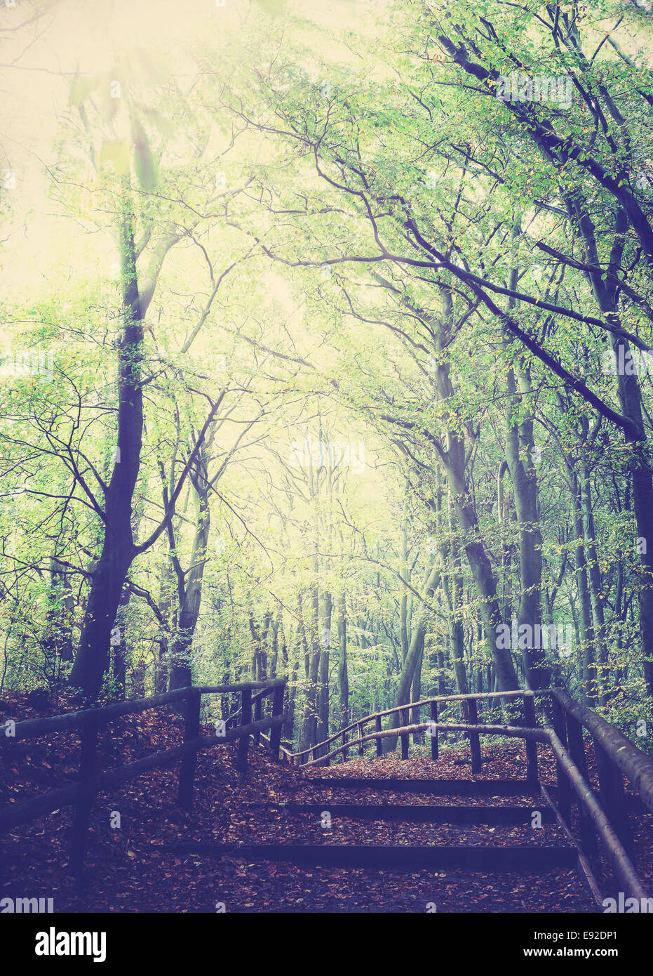 Retro vintage filtered picture of wooden path in forest. - Stock Image
