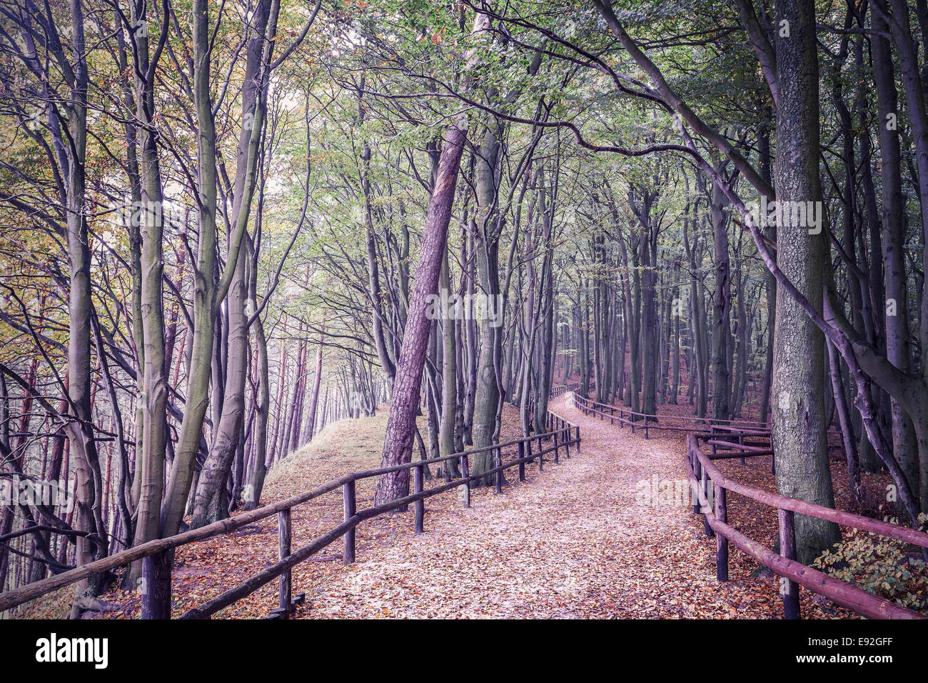 Retro filtered picture of a forest. - Stock Image