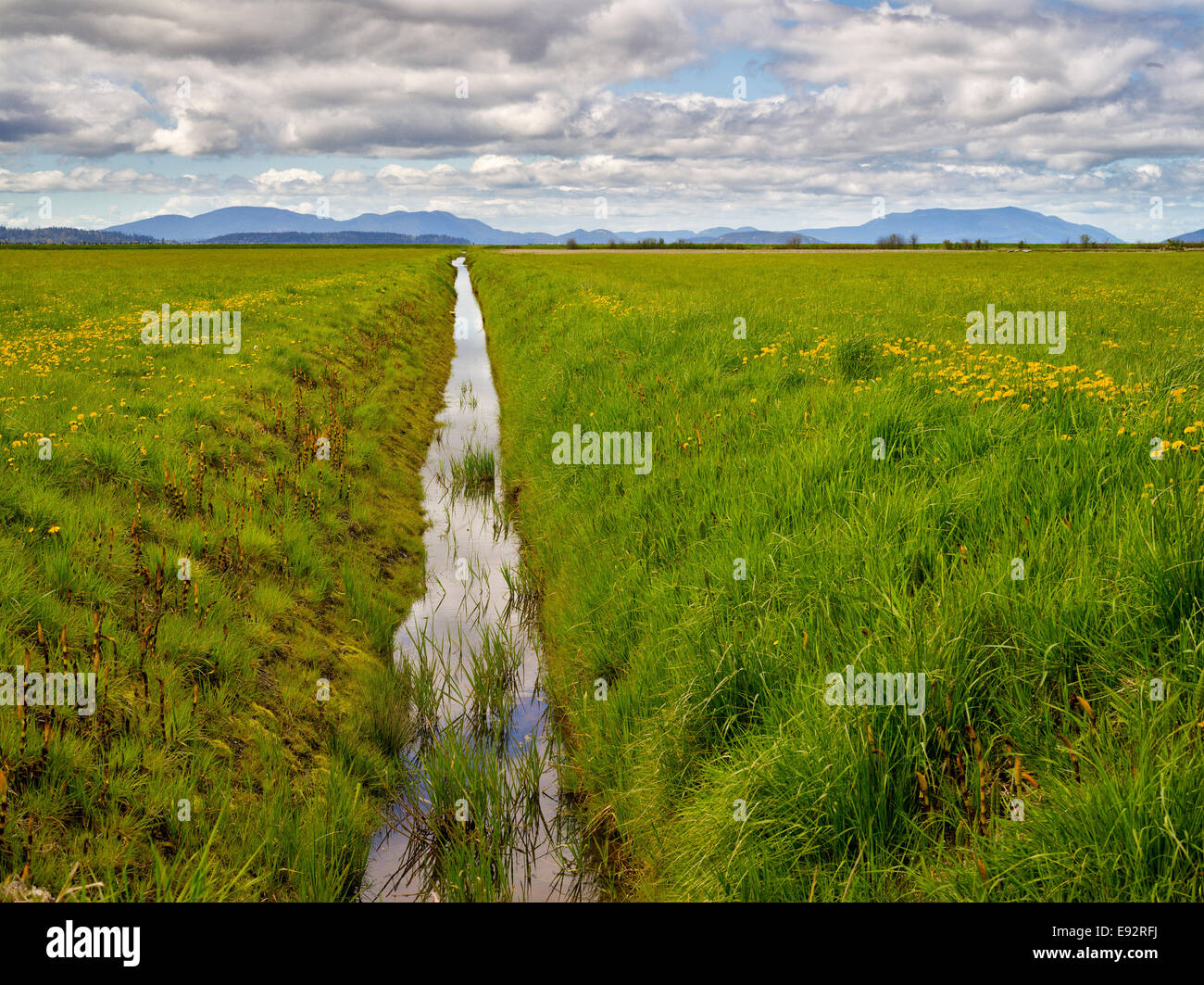 Canal drains rainwater from farmland reclaimed from the sea Stock Photo