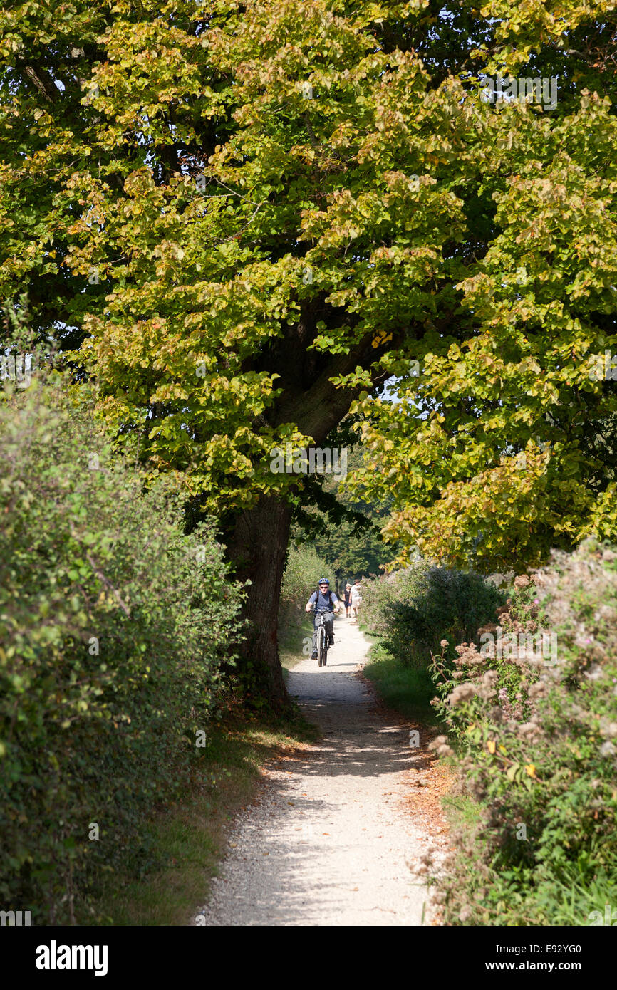 Cyclist on the towpath of the Chichester Canal, Hunston, West Sussex - Stock Image