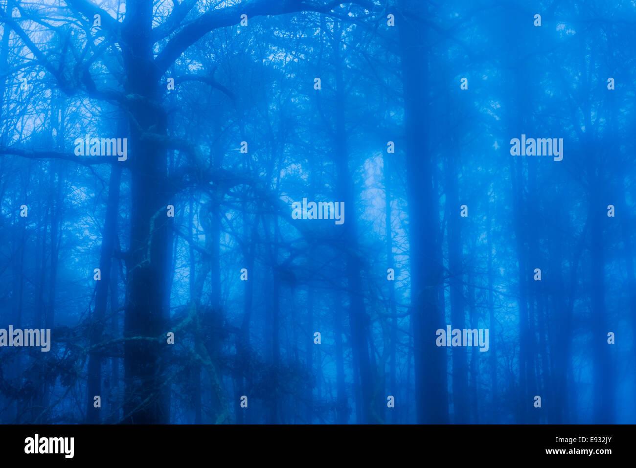 Dark, foreboding forest in fog - Stock Image