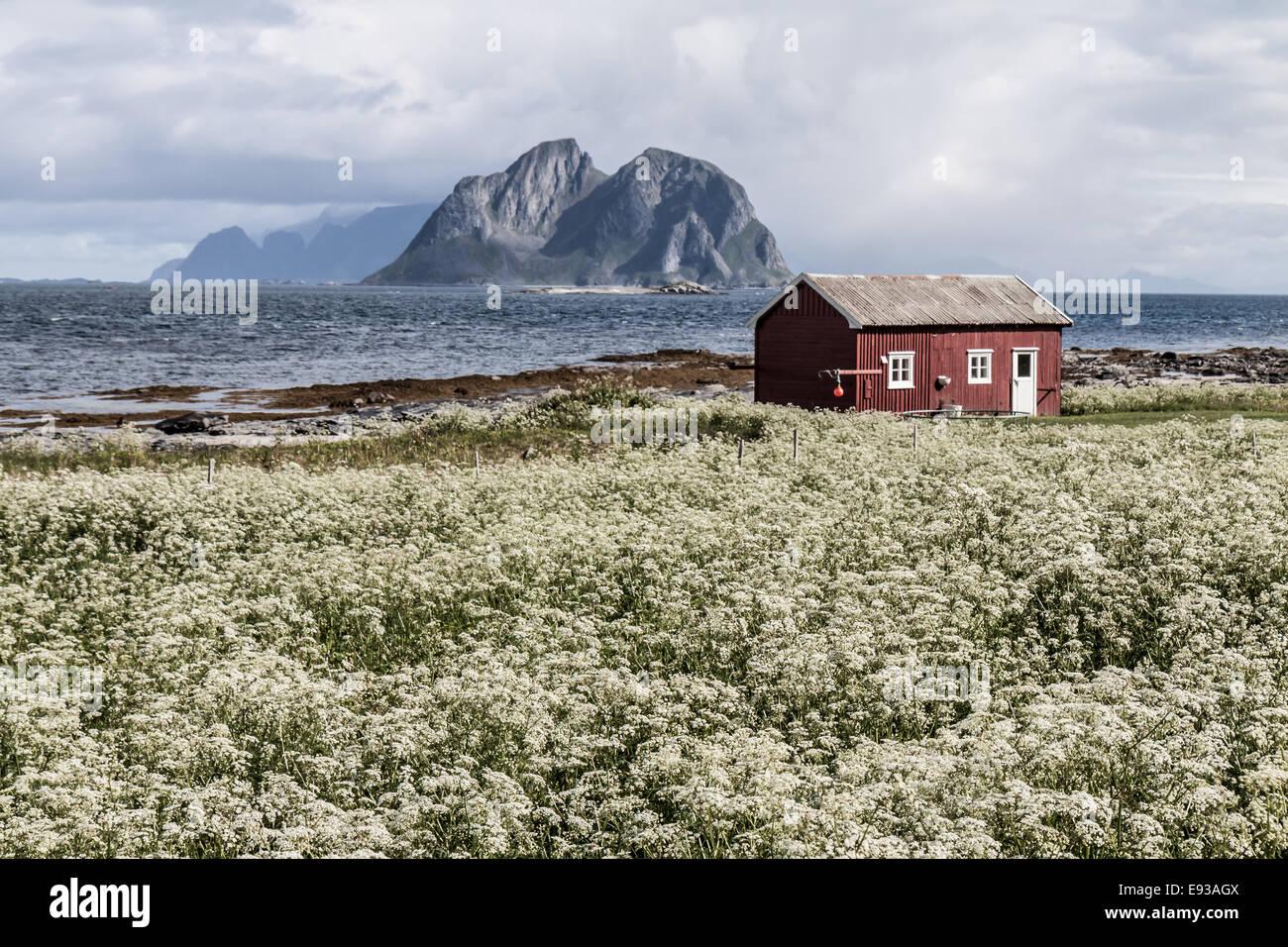 Vaeroy island, Lofoten island,Norway - Stock Image