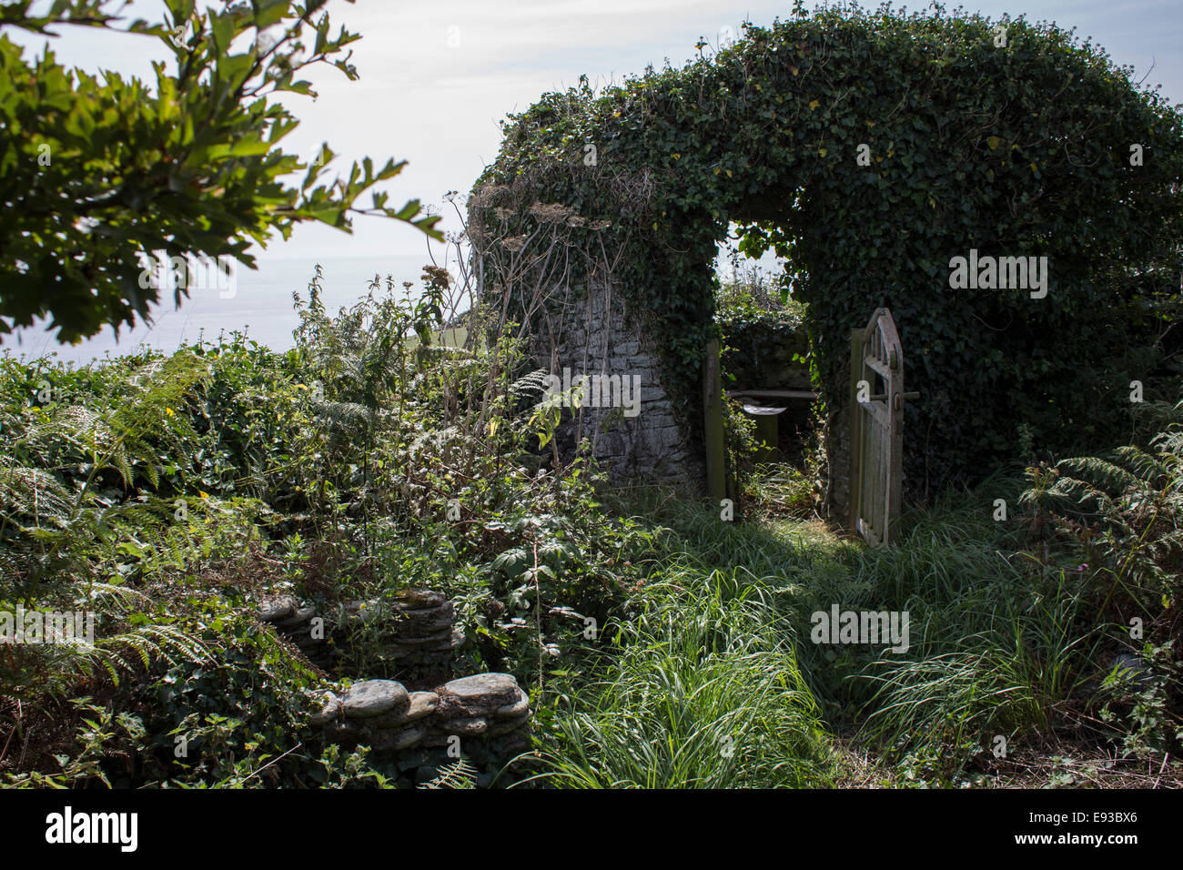 Ramshackle country garden at Peter Webber's hut at East Prawle, Devon - Stock Image