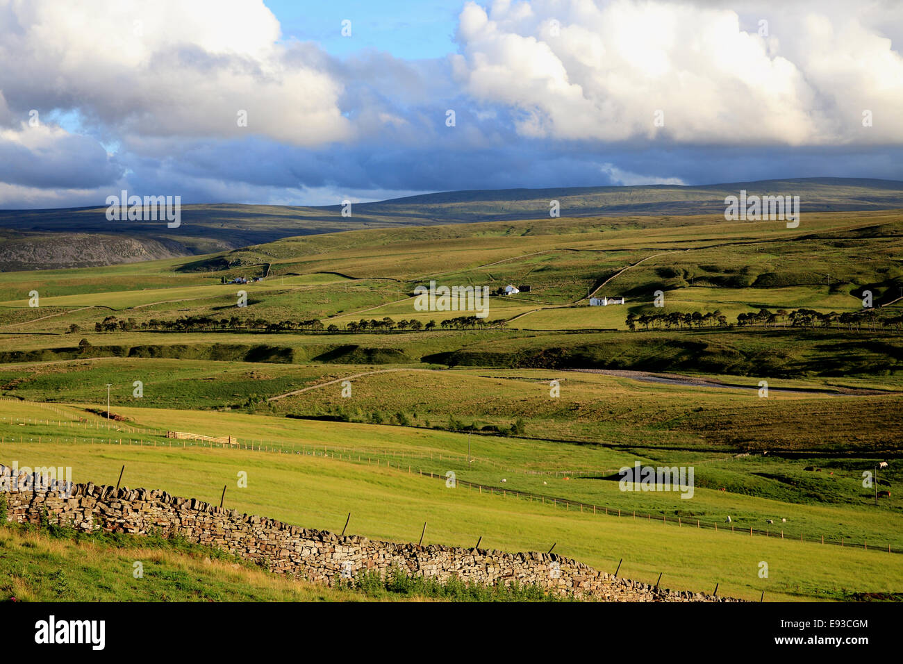 3238. Upper Teesdale, Durham, UK - Stock Image