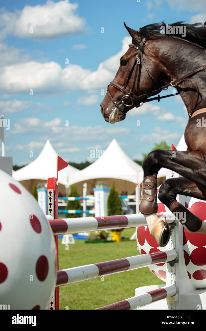 Equestrian Sports, horse jumping over the obstacle - Stock Image