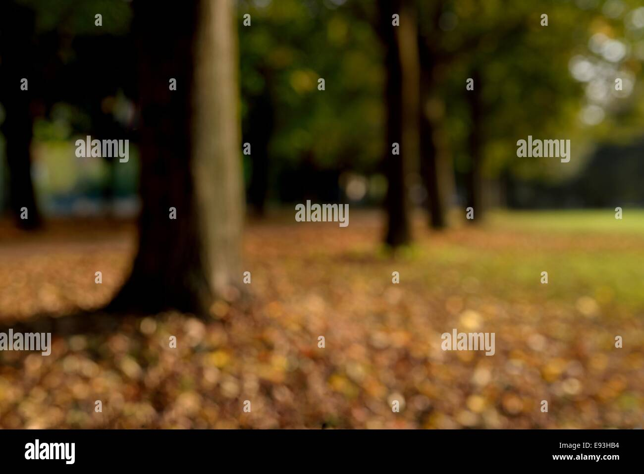 Trees in a city park (unfocused). - Stock Image