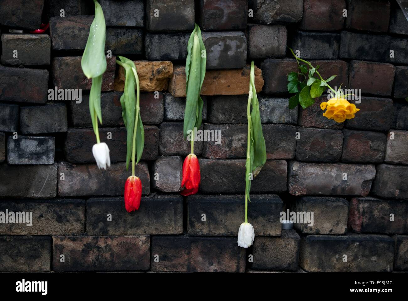 Tulips hang from a soot covered barricade made from paving setts at the Maidan in Kiev - Stock Image