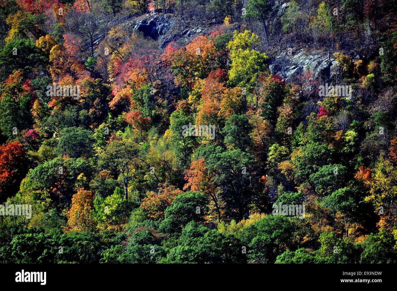 Cold Spring, NY:  Masses of dazzling Autumn foliage line the banks of the Hudson River viewed from the Town Dock - Stock Image