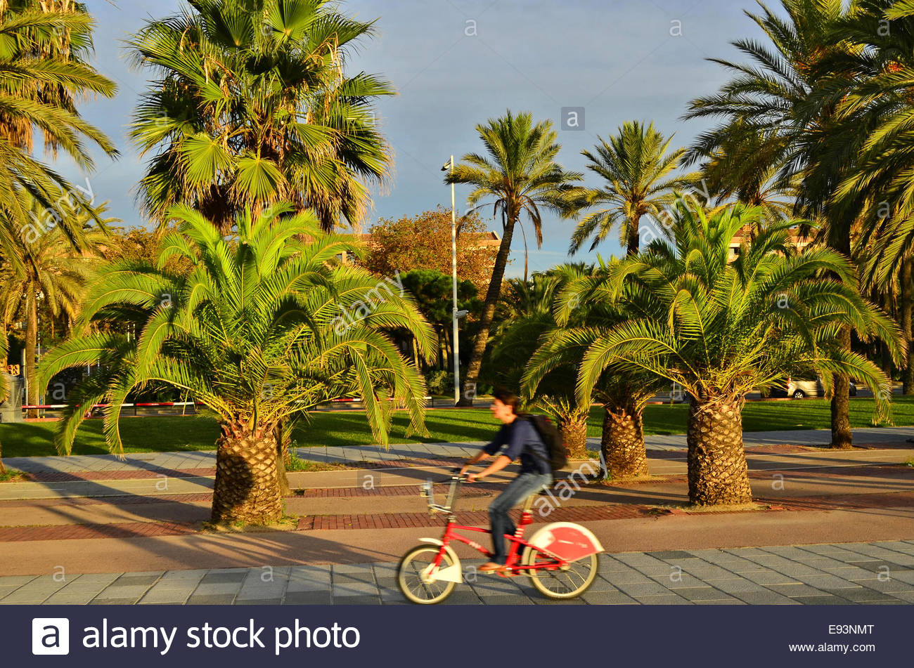 Woman cyclist palm trees morning commuting in Barcelona Spain Europe - Stock Image