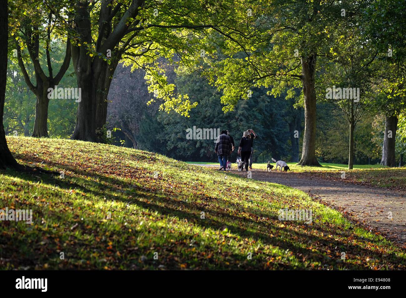 Family walking their dog through an autumnal park path - Stock Image