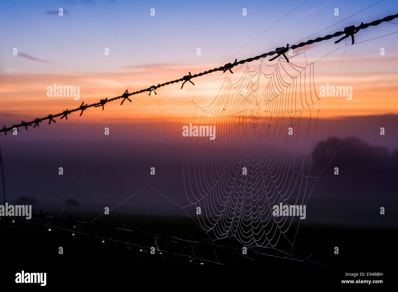 A cobweb on a barbed wire fence, against a bright dawn sky on a very misty morning. - Stock Image